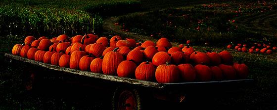 Pumpkin Patch Hayrides San Diego