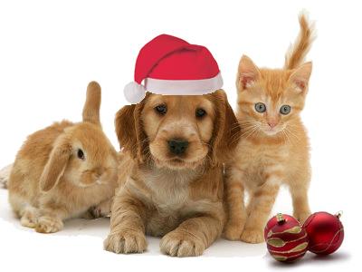 Christmas Eve Pets
